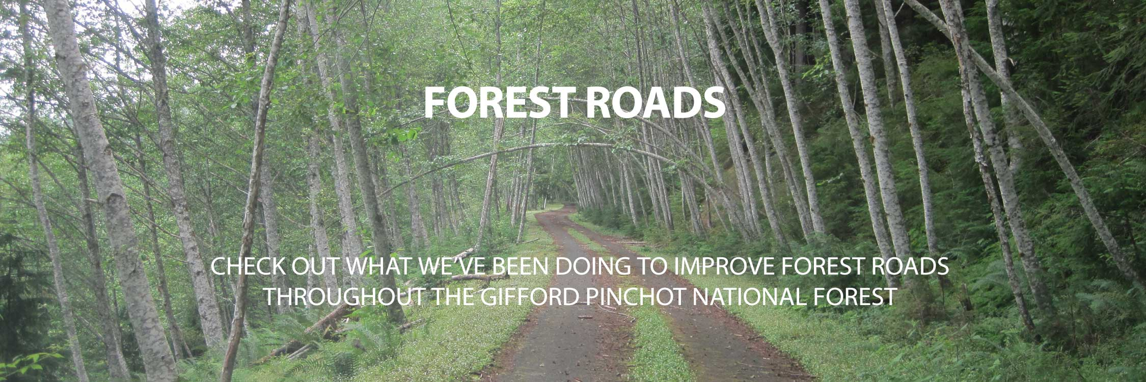 Forest-Roads-Banner