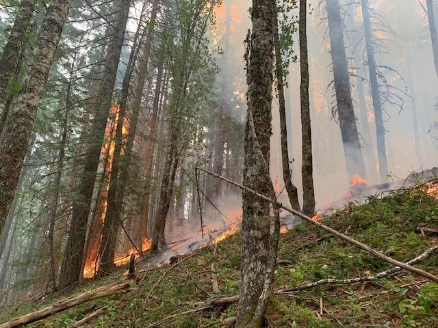 2020's Big Hollow fire burning in the Gifford Pinchot National Forest in 2020